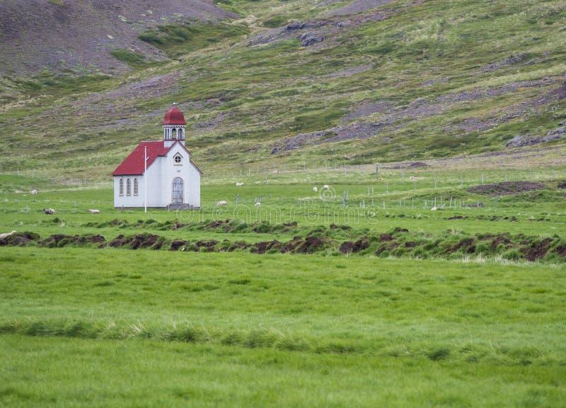 Gammal liten vit röd takkyrka på ängen för grönt gräs, får och royaltyfri fotografi