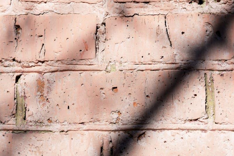Gammal målad tegelstenvägg med skuggor av filialer på den abstrakt bakgrundstegelstenvägg arkivbild