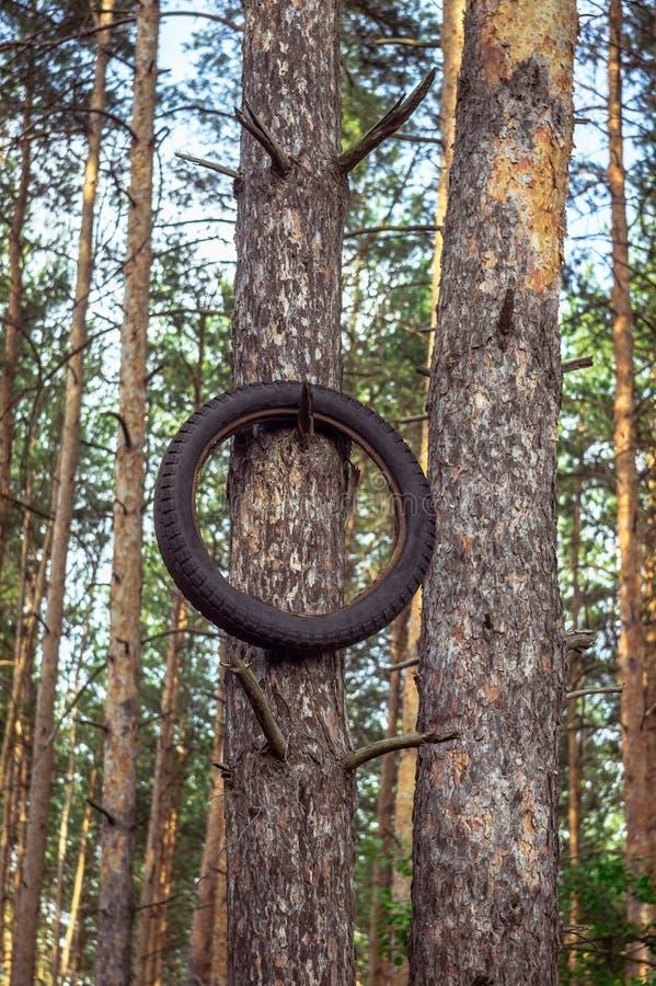 Gammal motorcykelgummihjulhängning på ett träd royaltyfria foton