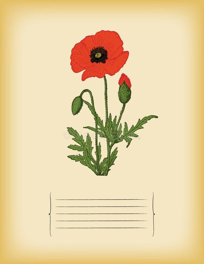 Gammal pappers- mall med den röda vallmoblomman. Vektor arkivbild