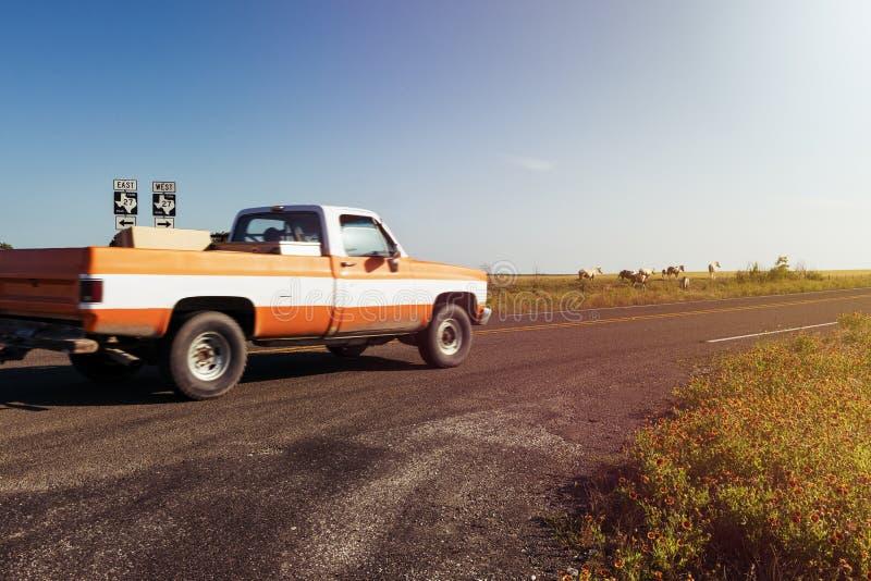 Gammal pickupridning längs en lantgårdväg med en ranch och hästar på bakgrunden på solnedgången i lantliga Texas royaltyfria bilder