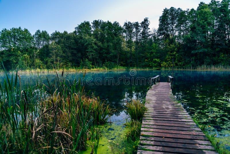 Gammal pir på den blåa skogsjön royaltyfria bilder