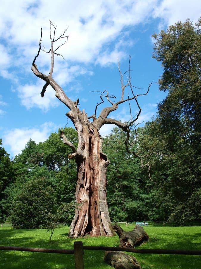 gammal poland för oak rogalin royaltyfria foton