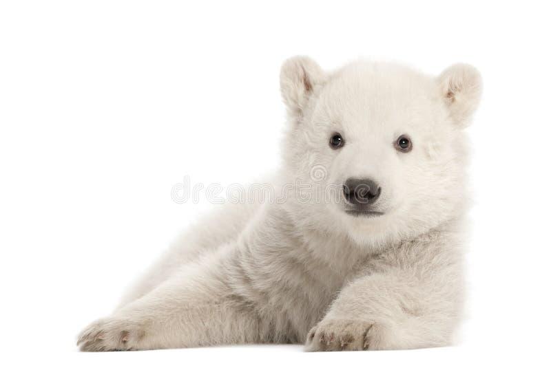 gammal polar ursus för 3 månader för björngröngölingmaritimus royaltyfri foto