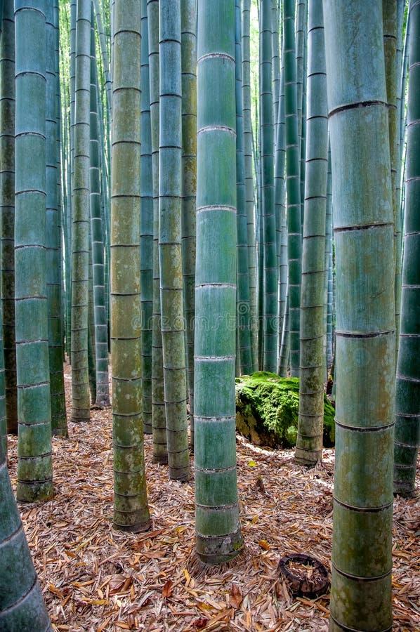 Gammal ren gräsplan-blått bambuskog royaltyfri foto