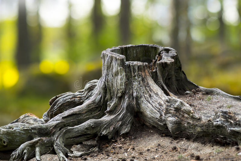 Gammal riden ut trädstubbe arkivfoton