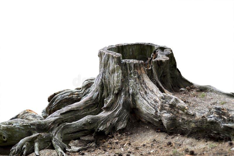 Gammal riden ut trädstubbe royaltyfri bild