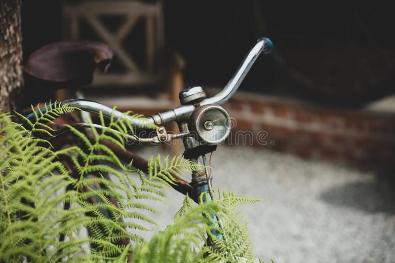 Gammal rostig cykel nära ormbunkebusken royaltyfri fotografi