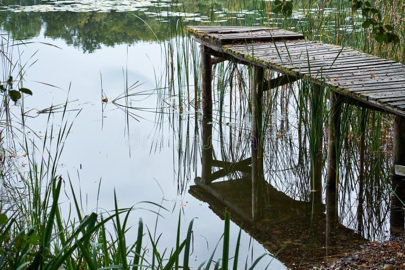 Gammal rutten pir som göras av trä på en sjö som täckas i mossa med saknade plankor på en sjö i skogen royaltyfria bilder