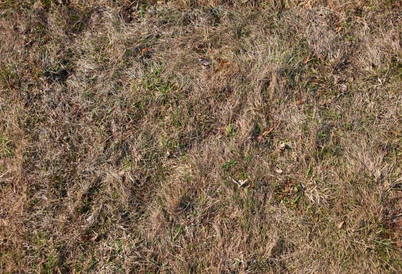 gammal seamless textur för gräs arkivfoto