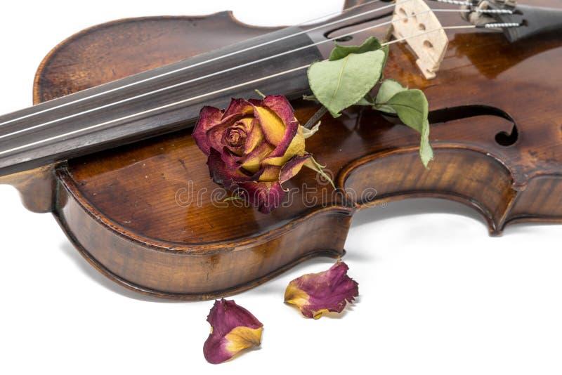 Gammal skinande fiol med den vissna röda gula rosa blomningen royaltyfri bild