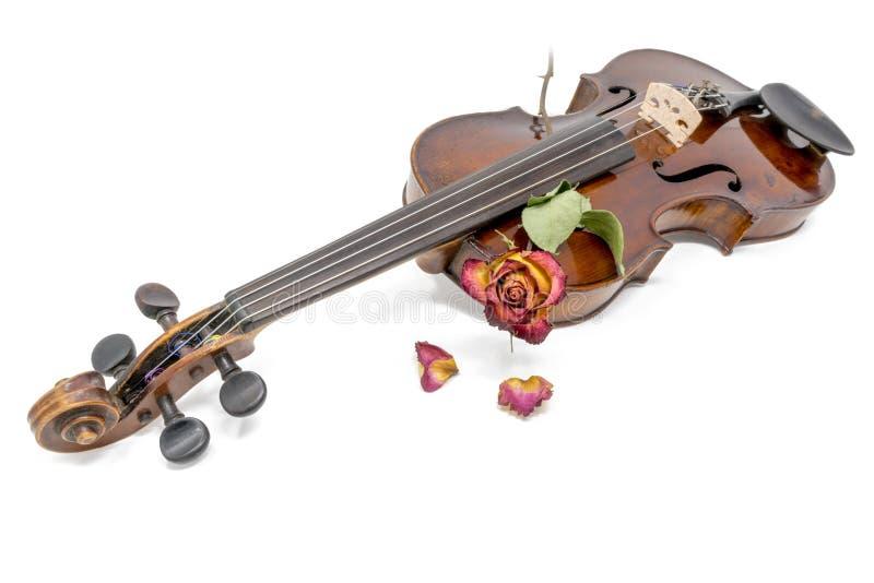 Gammal skinande fiol med den vissna röda gula rosa blomningen royaltyfria foton