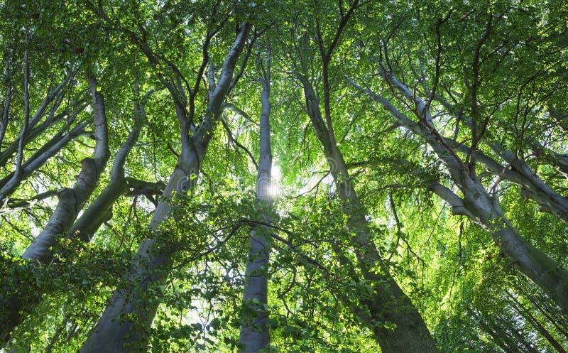 gammal skog royaltyfri foto