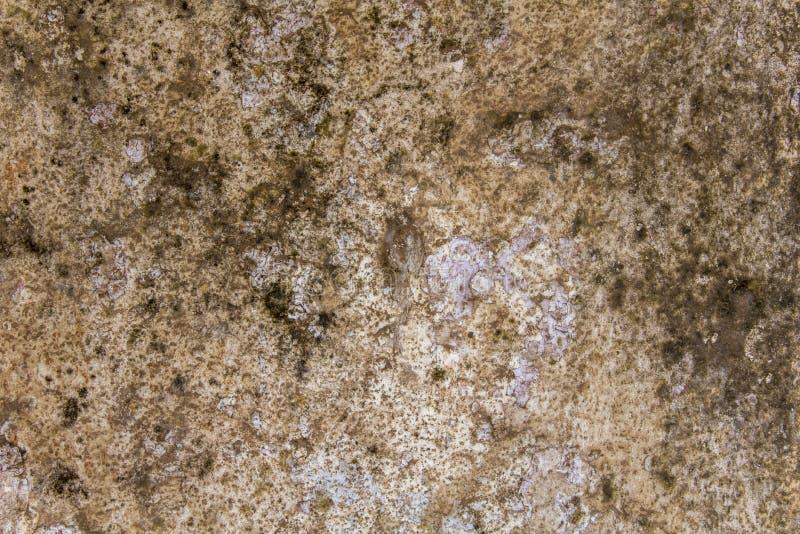 Gammal smutsig skadad vit grå betongvägg med den svarta formen och grön mossa Textur f?r grov yttersida arkivbilder