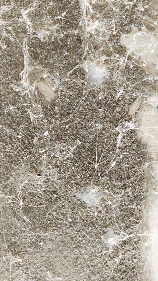 Gammal spindelnättextur royaltyfri foto