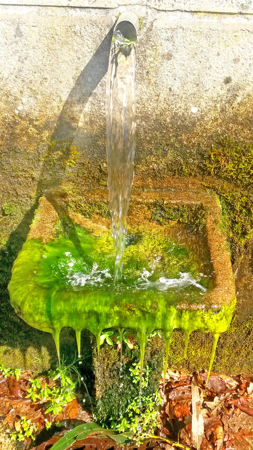 Gammal springbrunn med algen arkivfoto