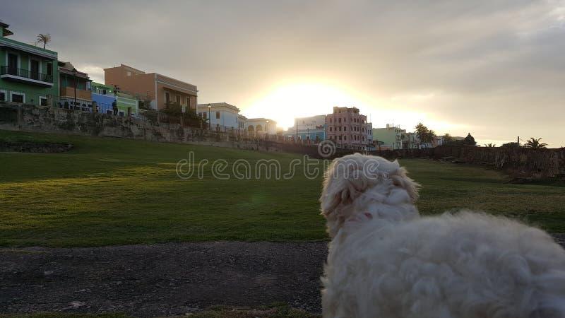 Gammal stad för Sunsetdog stad fotografering för bildbyråer