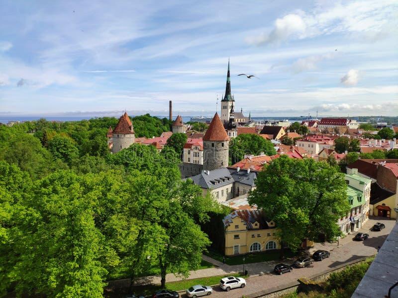 Gammal stad - Tallinn royaltyfria bilder