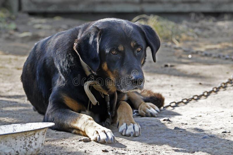 gammal stor hund arkivfoton
