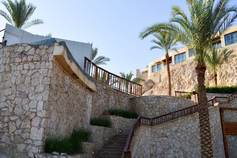 gammal stor trappuppgång och härliga tropiska palmträd med gröna filialer mot bakgrunden av fönster och en brant sandig cli royaltyfria bilder