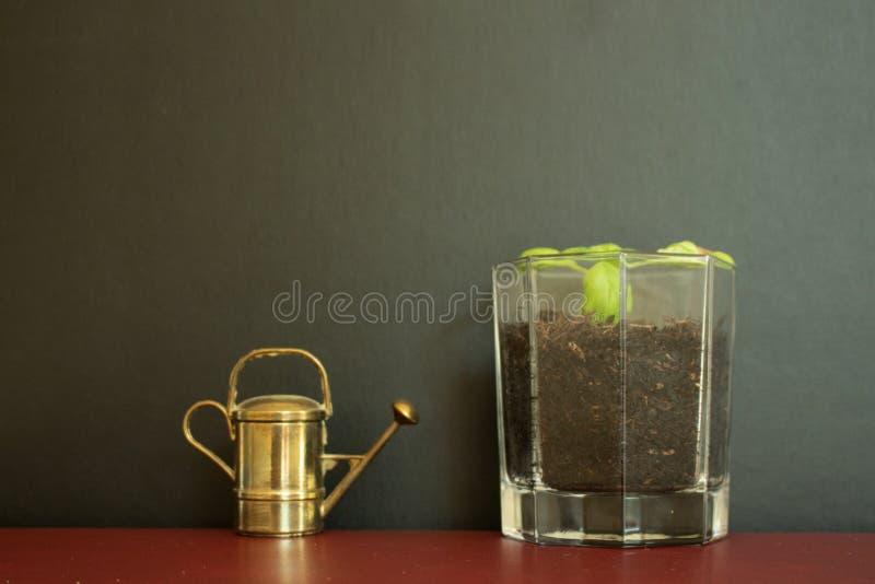 Gammal tappning som bevattnar kan hjälpmedlet förutom exponeringsglas som fylls med den lilla växten royaltyfri foto