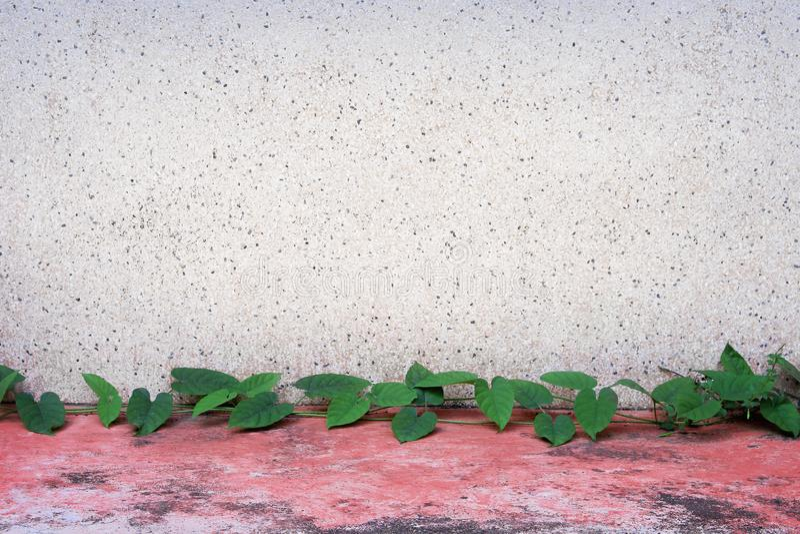 Gammal terrazzov?ggbakgrund med den gr?na sidav?xten som v?xer p? r?tt konkret golv- och kopieringsutrymme arkivfoton