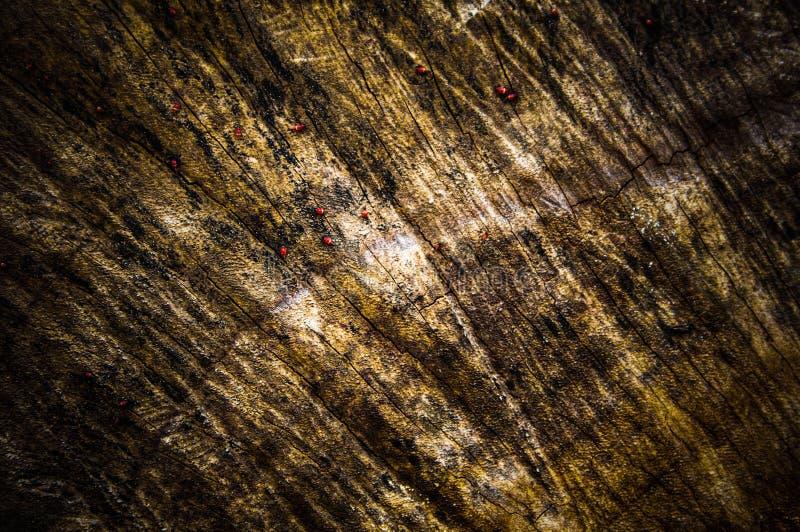Gammal textur för trä för stam för skällsnittträd, närbildbakgrundsmodell royaltyfria bilder