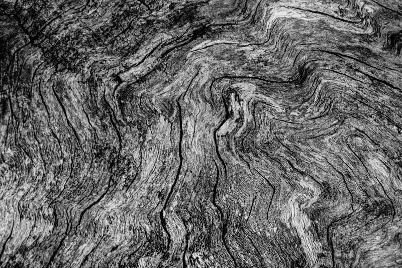 Gammal textur för woodgrain för trädutklippvisning fotografering för bildbyråer