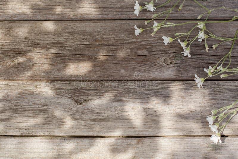 Gammal träbakgrund av bräden med solljus royaltyfri fotografi