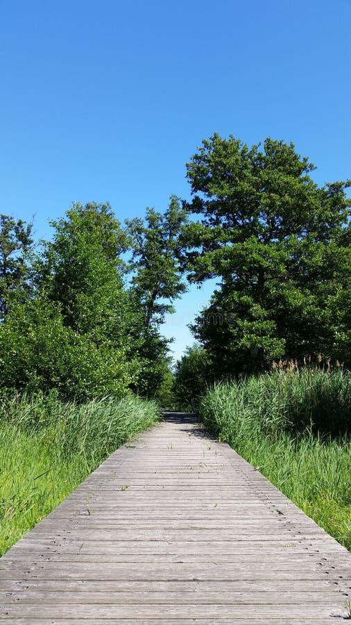 Gammal träbro med unga vasser och gröna sidor arkivbilder