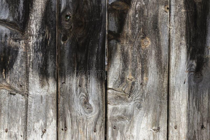 Gammal trädörr som bakgrund royaltyfria foton