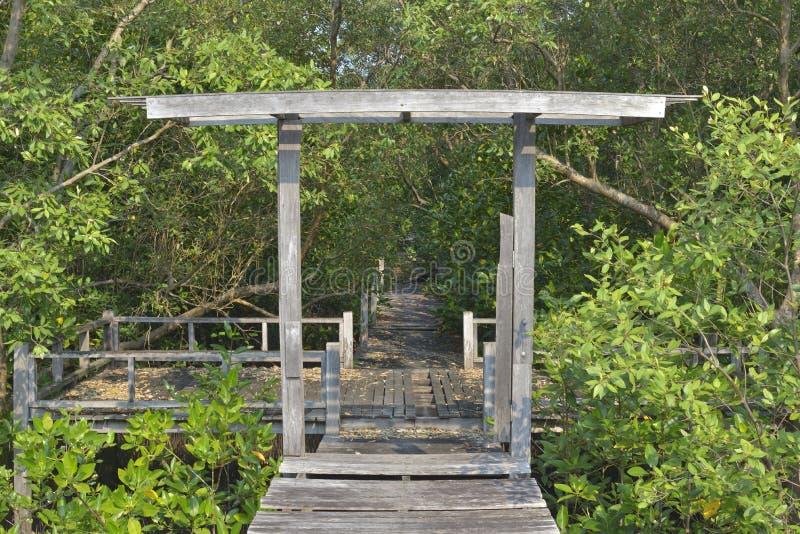 Gammal trägångbana- och mangroveskog arkivfoto