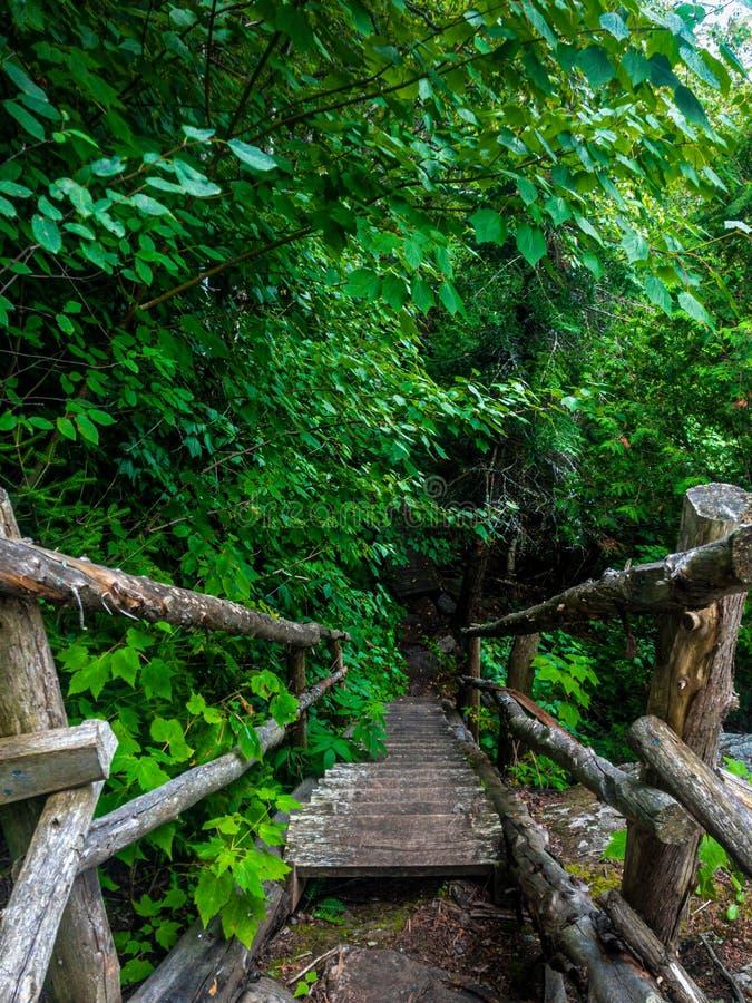 Gammal trätrappa i skogen royaltyfri foto
