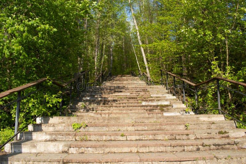 Gammal trappuppgång i skogen som leder upp royaltyfri fotografi