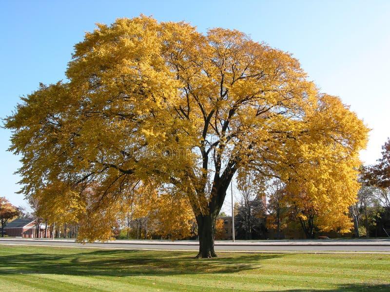 gammal tree för höst royaltyfri foto