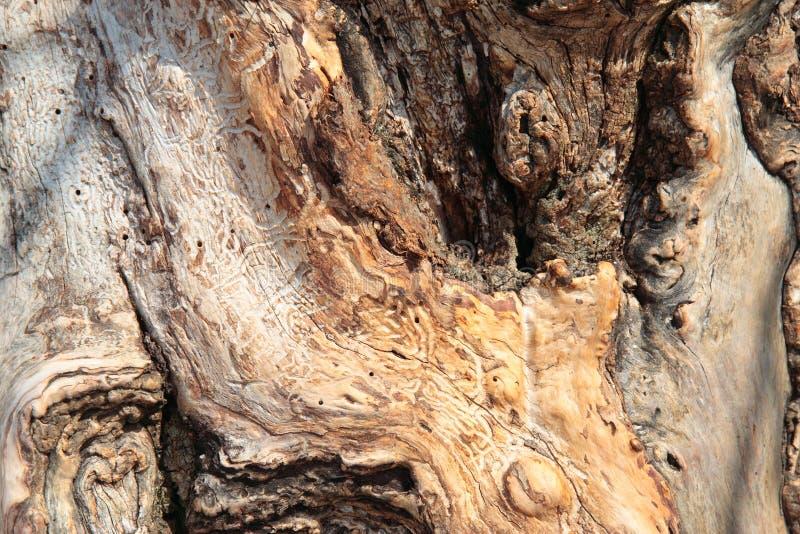 Gammal tree-stam arkivbild
