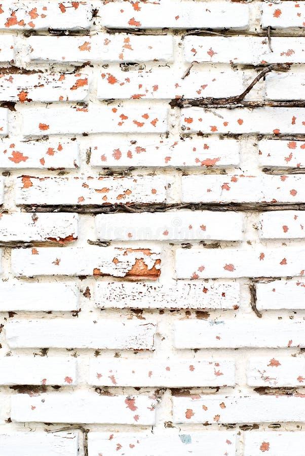 gammal väggwhite för tegelsten royaltyfria foton