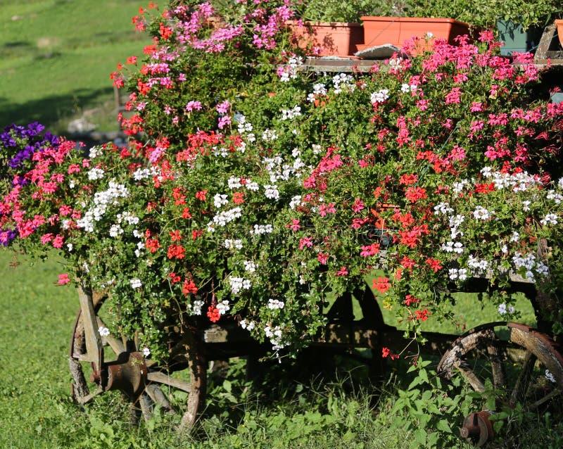 gammal vagn med många blomkrukor fotografering för bildbyråer