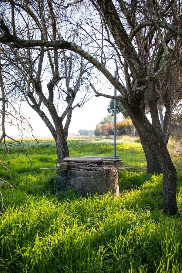 Gammal vattenbrunn på grönt fält med blommor under träd utan sidor på vinter arkivfoto