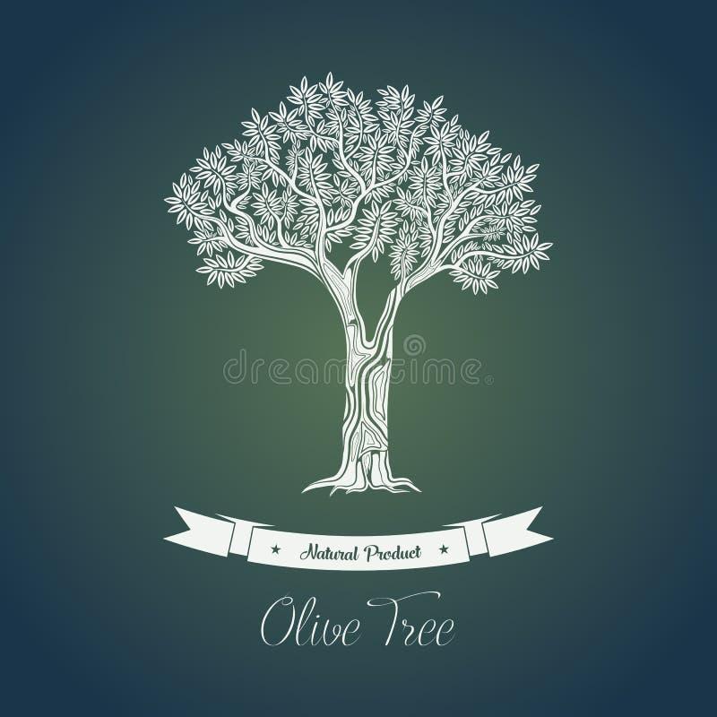 Gammalgrekiskaolivoljaträd i dunge royaltyfri illustrationer