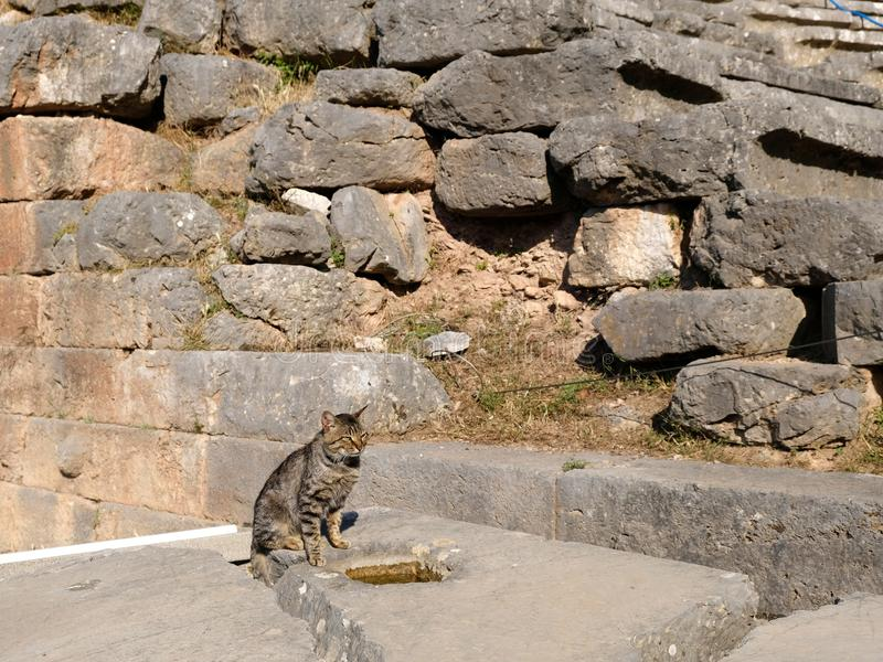 Gammalgrekiskastenvägg och en Grey Tabby Cat, fristad av Apollo, montering Parnassus, Grekland arkivfoton