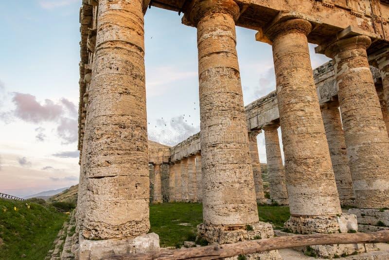 Gammalgrekiskatempelkolonner i Segesta, Sicilien arkivfoto
