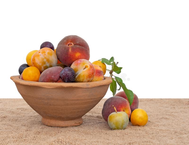 Gammalmodig arvfrukt från en lång övergiven fruktträdgård i forntida terrakottabunke, på hessians Sökt efter föda naturlig frukt arkivbild