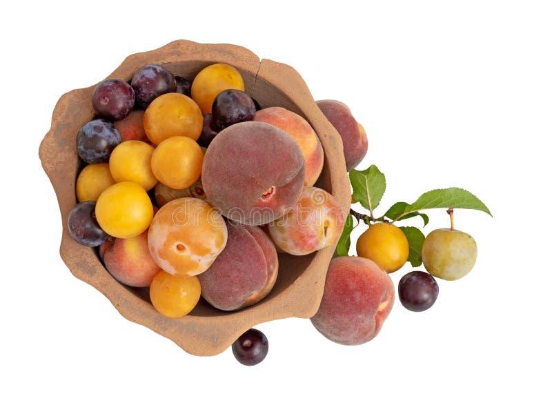 Gammalmodig arvfrukt från en lång övergiven fruktträdgård i forntida terrakottabunke Sökt efter föda naturlig frukt isolerat arkivfoto