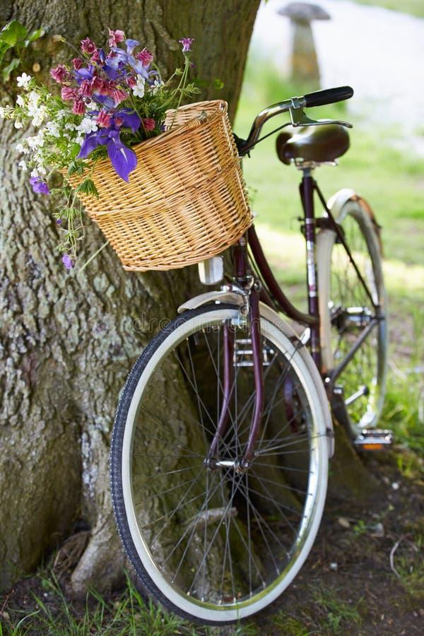 Gammalmodig cykelbenägenhet mot träd arkivbild