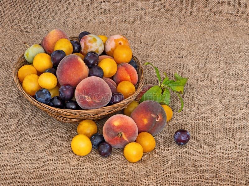 Gammalmodig frukt från en lång övergiven fruktträdgård Mycket små gula plommoner, kanske krikon, renklor och små söta persikor royaltyfri foto