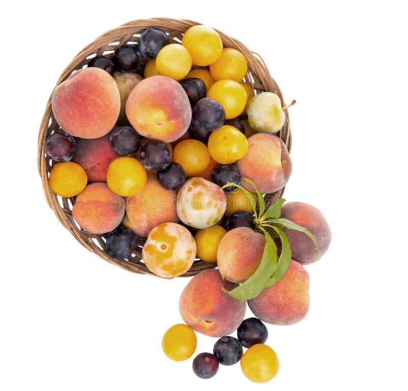 Gammalmodig frukt från en lång övergiven fruktträdgård Mycket små gula plommoner, krikon, renklor och små söta persikor royaltyfri fotografi