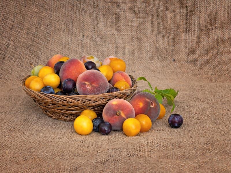 Gammalmodig frukt från en lång övergiven fruktträdgård Mycket små gula plommoner, krikon, renklor och små söta persikor royaltyfri bild