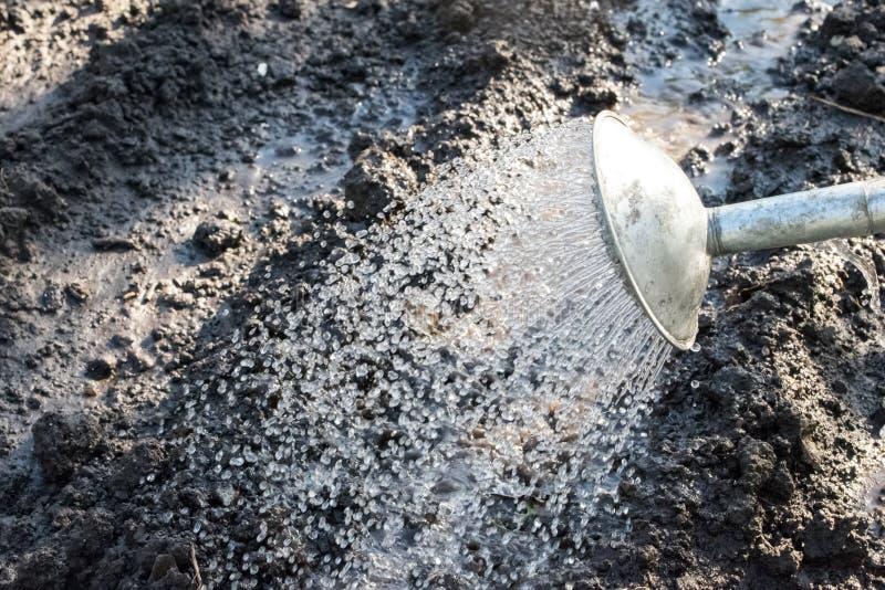 Gammalmodig metall som bevattnar kan och att bevattna av en trädgårds- säng arkivfoton