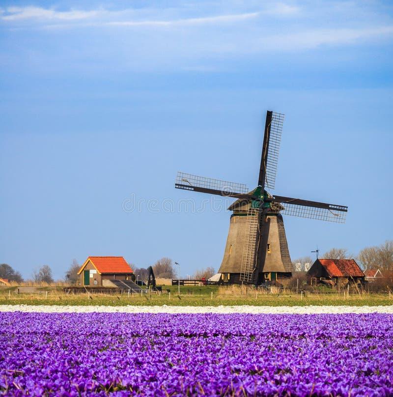 Gammalmodig väderkvarn i Nederländerna arkivfoton